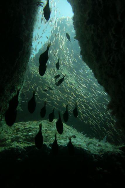 IMG_4376穴越しの魚影