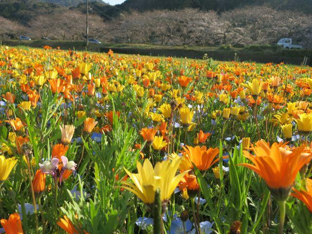 IMG_4672花畑
