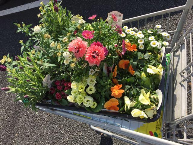 IMG_5566カゴの中の花