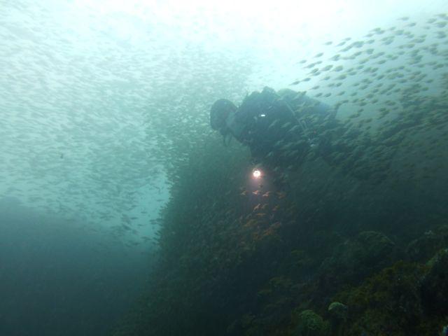 P1010474魚を集める