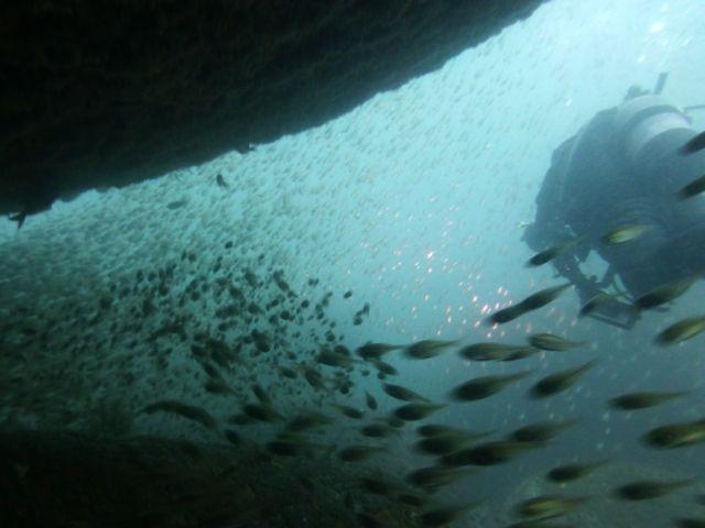 P1010552魚をかき分ける